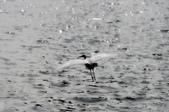 鳥集:IMGP6245-1.jpg