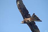 鳥集:IMGP2610-1.jpg
