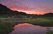 紅景天:IMGP0673-11.jpg