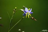 小花草也有春天:IMGP8204-11.jpg