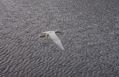鳥:IMGP7215-11.jpg
