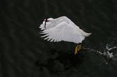 鳥:IMGP7265-11.jpg