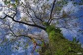 紅葉樹:IMGP8377-11.jpg