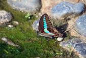 生態攝影:IMGP6471-11.jpg