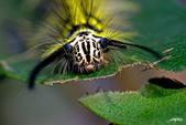 生態攝影:IMGP4871-11.jpg