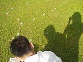 木棉花季:2008木棉花季
