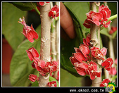 花草樹木- 小木本植物:樹幹花