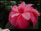 花草樹木- 小木本植物:絢麗多姿