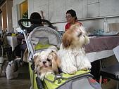 桃園綠風草原餐廳小聚:DSC05929.JPG