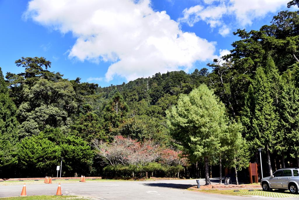 大雪山國家森林遊樂區 (7).JPG - 大雪山國家森林遊樂區