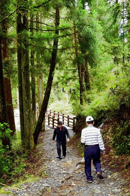 榛山森林浴步道 (3).JPG - 觀霧國家森林遊樂區-大鹿林道西線,榛山森林浴步道