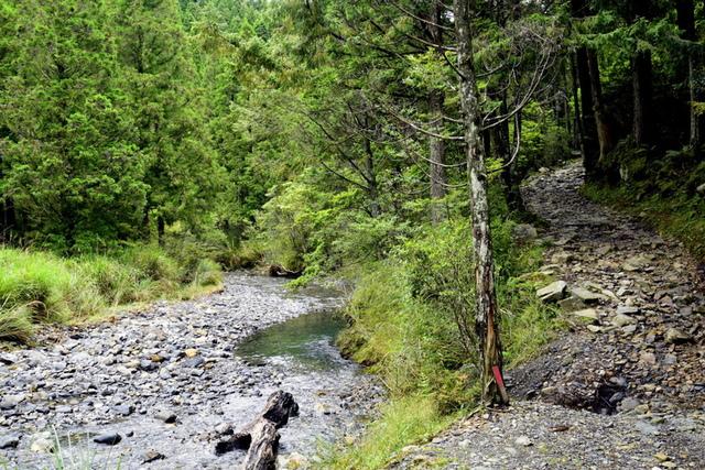 榛山森林浴步道 (5).JPG - 觀霧國家森林遊樂區-大鹿林道西線,榛山森林浴步道