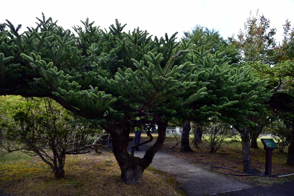 大雪山國家森林遊樂區 (19).JPG - 大雪山國家森林遊樂區