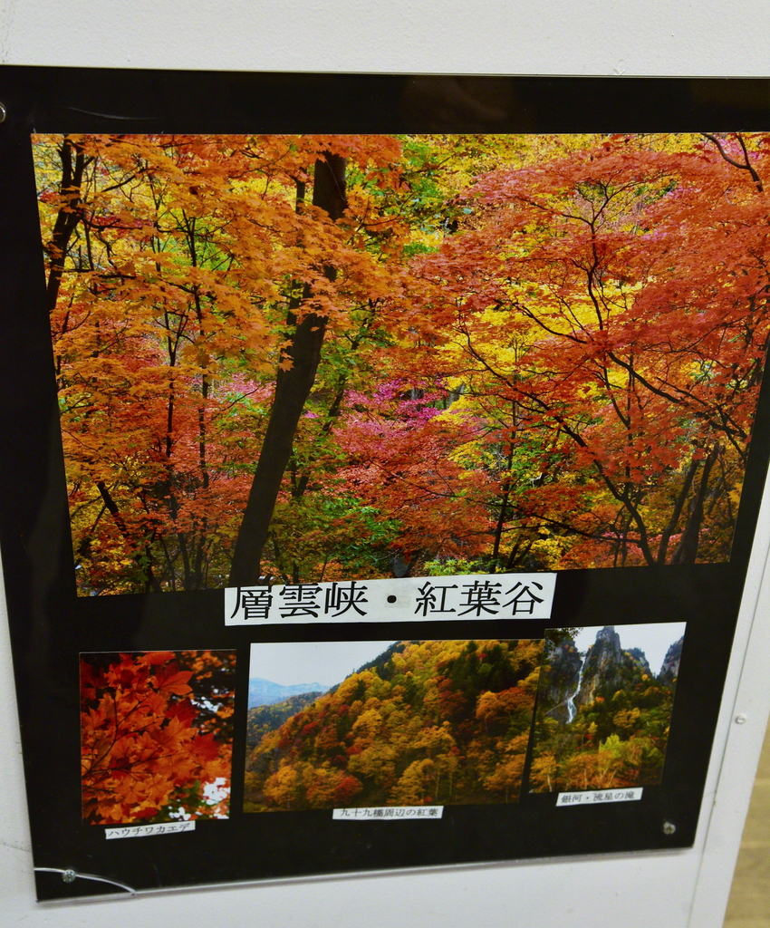 DSC_0914.JPG - 北海道(道東,道央)
