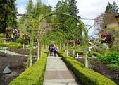 維多利亞布查花園:維多利亞布查花園_1000420_0510 913.jpg