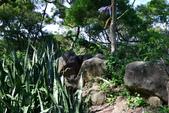 金面山(剪刀石山),新坡尾山,內湖山:(14).JPG