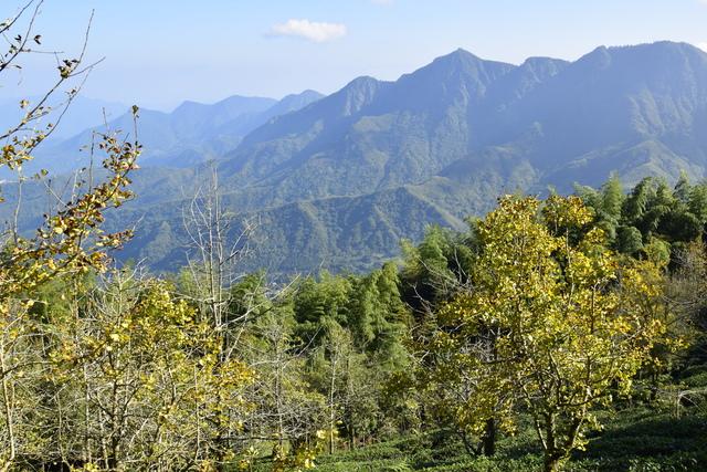 _DSC0162.JPG - 小半天風景區&忘憂森林