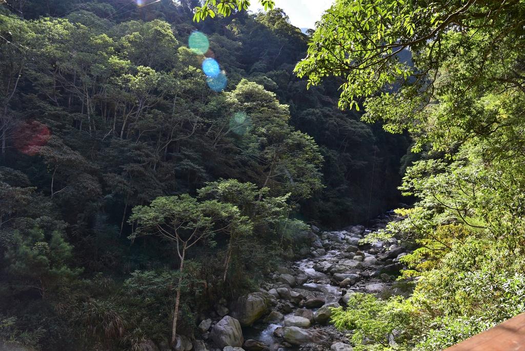 八仙山國家森林遊樂區 (21).JPG - 八仙山國家森林遊樂區
