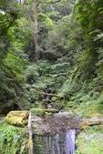 拉拉山國有林自然保護區:_DSC0328.JPG