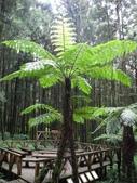 明池國家森林遊樂區:明池國家森林遊樂區 061.jpg