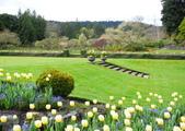 維多利亞布查花園:維多利亞布查花園_1000420_0510 930.jpg