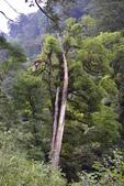 拉拉山國有林自然保護區:_DSC0342.JPG