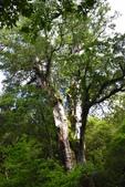 拉拉山國有林自然保護區:_DSC0326.JPG