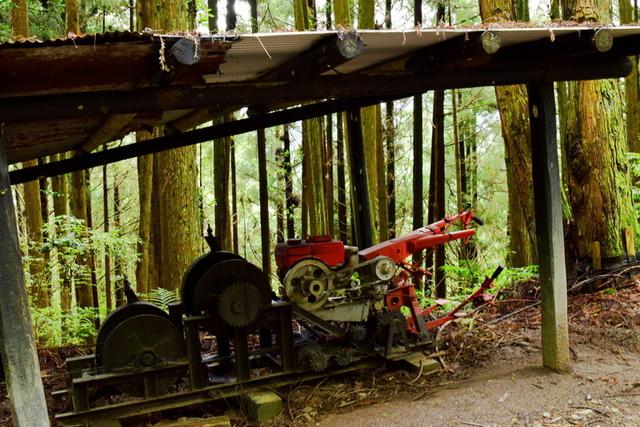 大鹿林道西線 (17).JPG - 觀霧國家森林遊樂區-大鹿林道西線,榛山森林浴步道