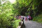 拉拉山國有林自然保護區:_DSC0329.JPG