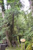 拉拉山國有林自然保護區:_DSC0349.JPG