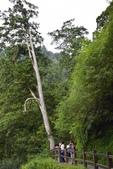 拉拉山國有林自然保護區:_DSC0341.JPG