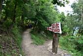 司馬庫斯巨木步道:DSC_6219.JPG