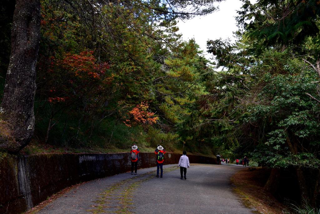 大雪山國家森林遊樂區 (28).JPG - 大雪山國家森林遊樂區