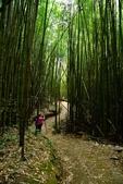 司馬庫斯巨木步道:DSC_6242.JPG