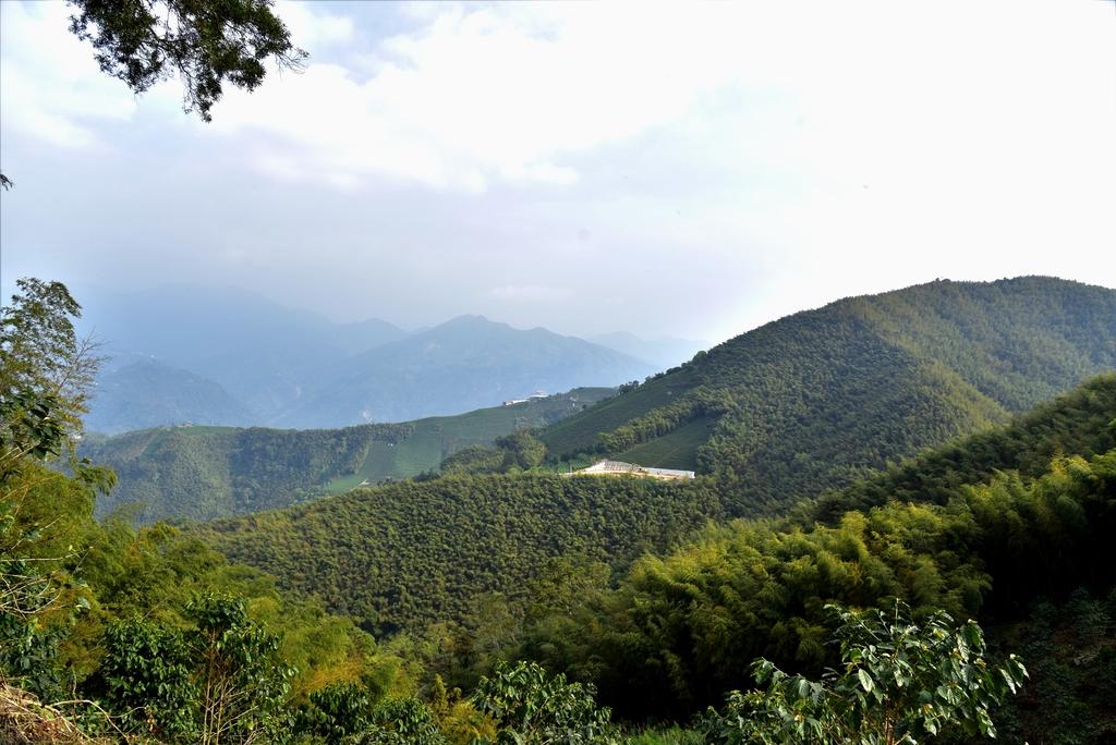 二尖山步道 (10).JPG - 二尖山步道,碧湖山觀光茶園,麗景精品休閒旅館