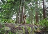 維多利亞布查花園:維多利亞布查花園_1000420_0510 828.jpg