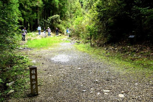 榛山森林浴步道 (7).JPG - 觀霧國家森林遊樂區-大鹿林道西線,榛山森林浴步道