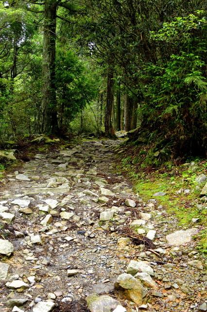榛山森林浴步道 (6).JPG - 觀霧國家森林遊樂區-大鹿林道西線,榛山森林浴步道