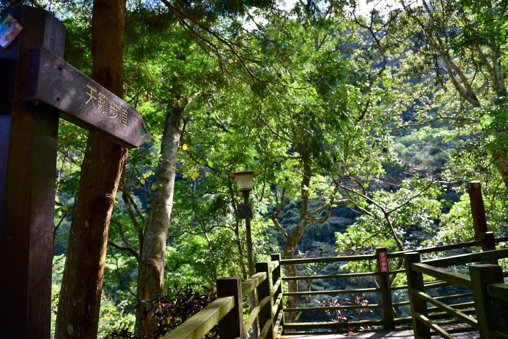 八仙山國家森林遊樂區 (23).JPG - 八仙山國家森林遊樂區
