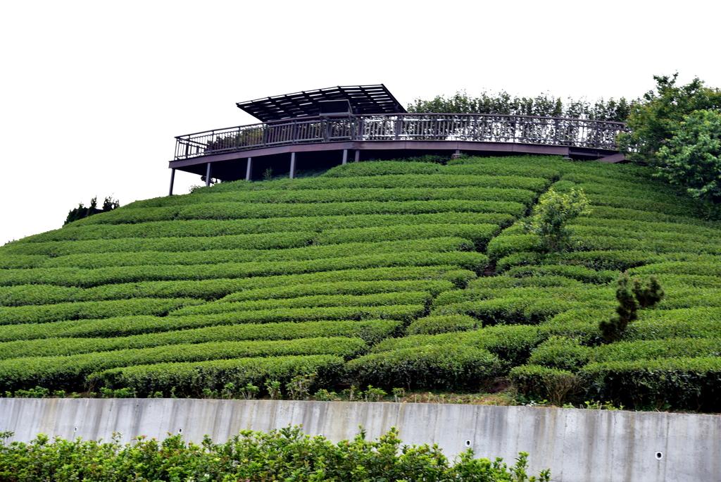 碧湖山觀光茶園 (8).JPG - 二尖山步道,碧湖山觀光茶園,麗景精品休閒旅館