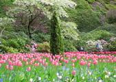 維多利亞布查花園:維多利亞布查花園_1000420_0510 836.jpg