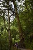 拉拉山國有林自然保護區:_DSC0347.JPG