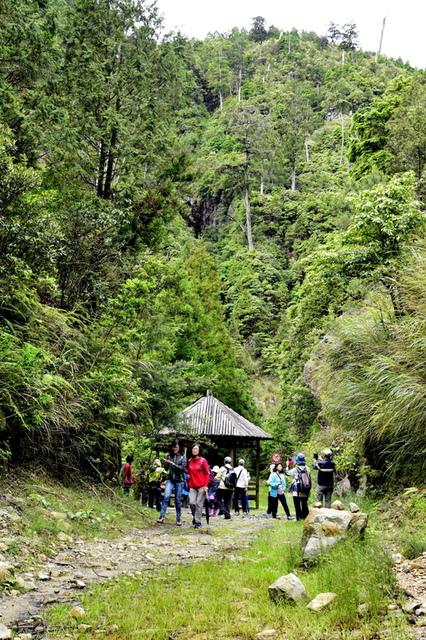 榛山森林浴步道 (11).JPG - 觀霧國家森林遊樂區-大鹿林道西線,榛山森林浴步道