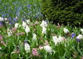 維多利亞布查花園:維多利亞布查花園_1000420_0510 837.jpg