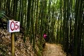 司馬庫斯巨木步道:DSC_6238.JPG