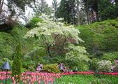 維多利亞布查花園:維多利亞布查花園_1000420_0510 839.jpg