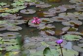 哭泣湖畔自然生態園區:DSC_0277.JPG