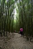 司馬庫斯巨木步道:DSC_6243.JPG