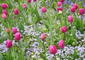 維多利亞布查花園:維多利亞布查花園_1000420_0510 841.jpg