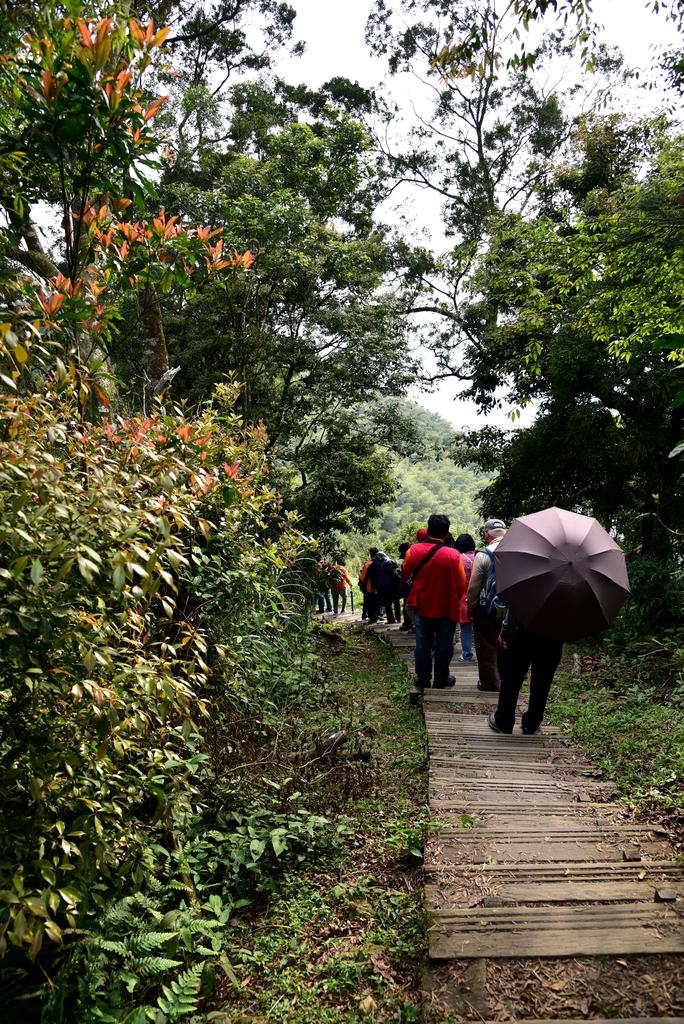 二尖山步道 (9).JPG - 二尖山步道,碧湖山觀光茶園,麗景精品休閒旅館